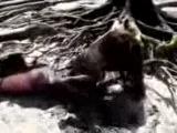 Мёртвая русалка выброшена на берег после шторма!