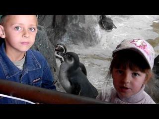Пингвины...Жаль, что не императорские))))))