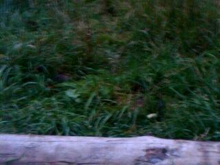 Обнаглевшие лесные мыши