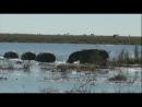 Золотой Глобус. 89 Ботсвана. В сердце Африки (2011)