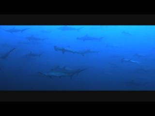 Pacific! feat. El Perro Del Mar - Unspoken (Anoraak Remix)