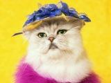 Кошка поёт песню