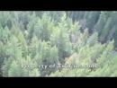 TwiFans летят на вертолете, чтобы СНЯТЬ ТЕРРИТОРИЮ съемок фильма ~ Сага Сумерки Рассвет