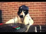 DJ Kitty feat Ill Bill - Trust Nobody. Kitty DJ video remix HD
