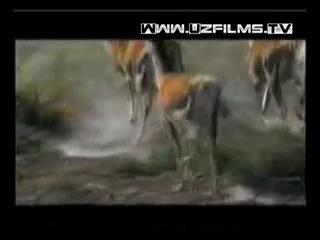 Qasos O'zbek Film