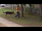 собака-педафил в городе!!!