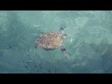 кормление КАПЛУМАКА ( черепахи )с большого пирса