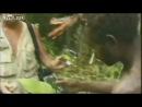 Племя дикарей впервые встречает белого человека. Новая Гвинея 1976