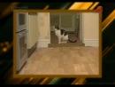 Привет, фауна! (Домашние животные, 07.07.2011) 19 выпуск. Говорящие коты и сварливые кошки. Летающие собаки и плавающие еноты