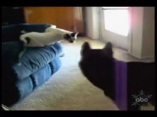 Подборка с забавными котиками