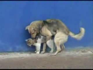 Кота Пёс Озабоченная собака