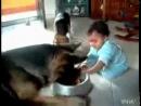 Ребенок и пёс борятся за еду)