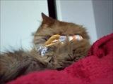 Ametsub - 2 Cats