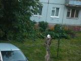 Кошка на дереве (детям не показывать, есть мат)