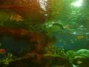 Океанариум. В подводном туннеле (2)