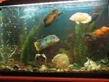 Красивый был аквариум , а главное - девочки от такого ночника тащились...