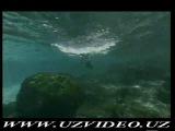 The Life of Birds  Qushlar Xaqida Xaqiqat (Ozbek tilida)