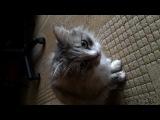 Кот vs Кот говорит гад =)