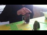 Мой бешеный попугай защищает огурец))))))