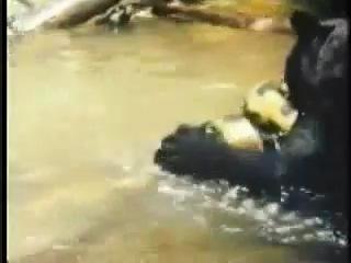 Ягуар vs. Анаконда