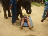 Слон и оральные ласки