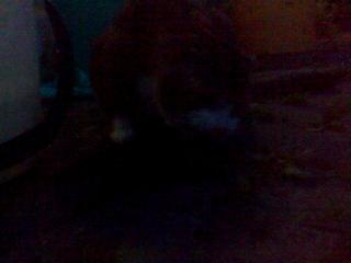 МОЙ любимый кот,МАСЯНЯ,ловит рыбу !!!
