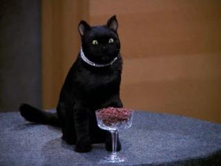 Зельда и Селем в рекламе кошачьего корма