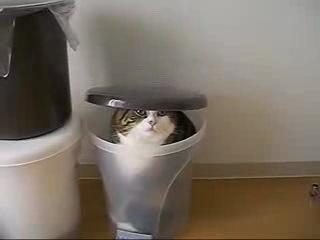 Кот Мару и коробки.