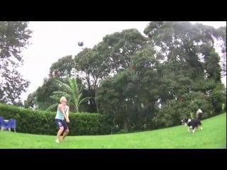 Собака-волейболист