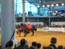 Танго (Международная конная выставка Иппосфера)