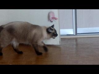 Наш чудо кот опять чудит.....