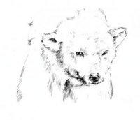 Алексей Медведь
