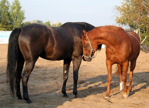 фото конные клубы екатеринбурга