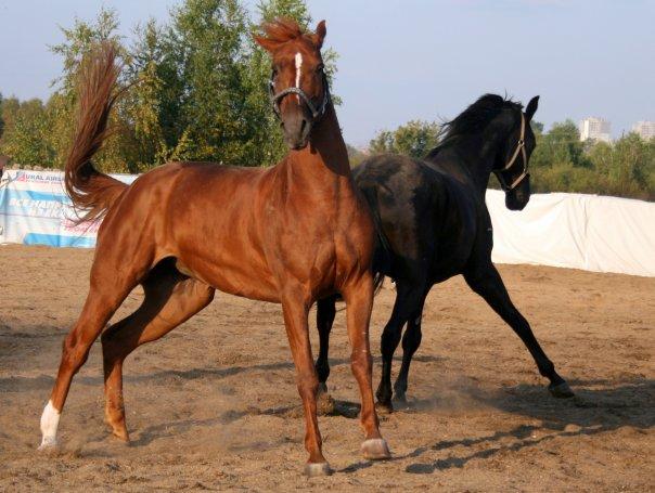 фото катание на лошадях екатеринбург