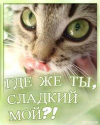 Олеся Кузьменко, 5 апреля , Липецк, id12126598