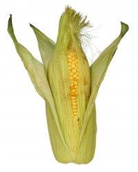 Кукуруза Полей