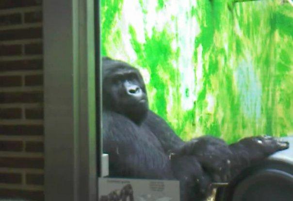 Антверпен зоопарк