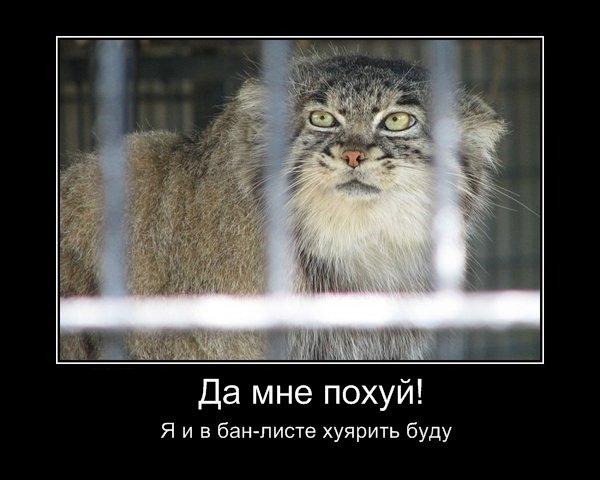 http://cs1422.vkontakte.ru/u1233584/5359466/x_c9e0bd7e.jpg