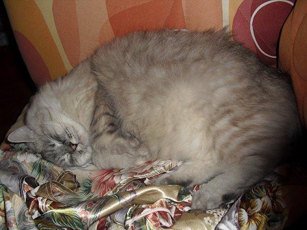 http://cs1424.vkontakte.ru/u929835/7924727/x_39d0f5bf.jpg