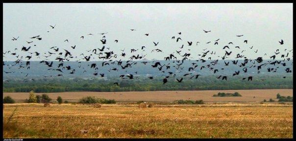 птицы, пейзаж.