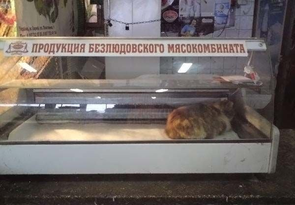 https//cs1433.vkontakte.ru/u12892272/455342/x_776d16c4.jpg