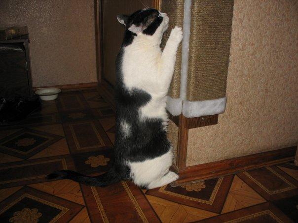 Как сделать так чтобы кошка ела