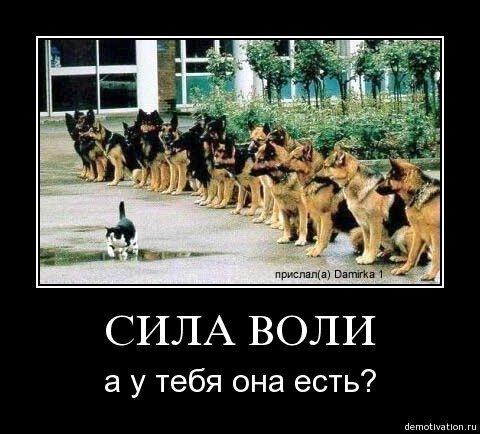 http://cs1495.vkontakte.ru/u24469224/95063594/x_a597fbb0.jpg