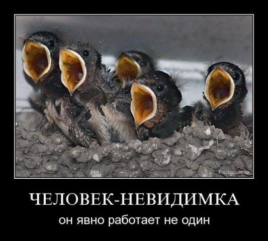 http://cs1497.vkontakte.ru/u1529451/91593314/x_c1c6c673.jpg