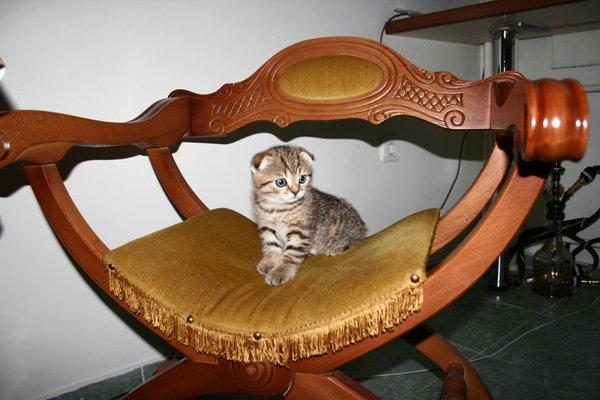 аусси и кошка X_990d4b77