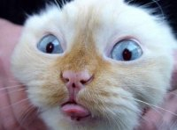 фото кошек смешные.