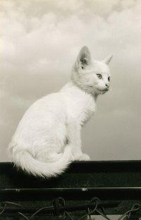 Котёнок Белый, Rennes