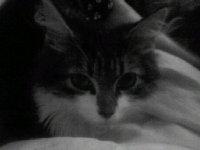 Кіт Серун