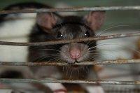 Mouse Mouse, 5 марта 1996, Москва, id15204500
