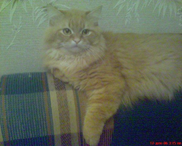 http://cs1502.vkontakte.ru/u1196112/7529165/x_34131ad5.jpg